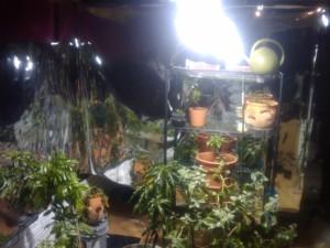 Indoor Greenhouse (2009)
