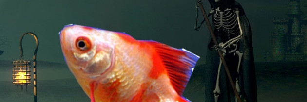 Farewell Pierre: A fallen goldfish, friend, and family member